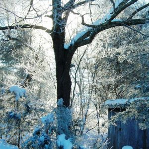 Winter sun enlightens the snow and hoarfrost around the hermit's shack